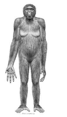 Una ilustración del aspecto de Ardi