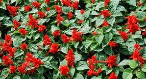 Ideas para darle un toque navideño a tu jardín