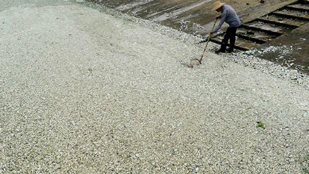 El río Huangpu amaneció con miles de peces muertos en sus aguas