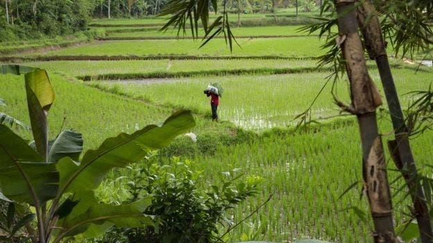 El pueblo donde creció Siti Aisyah creció en una comunidad de agricultores.