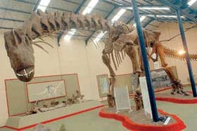 La gigantesca réplica del Argentinosaurus huinculensis, expuesta en el Museo Carmen Funes