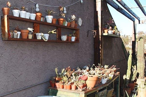 Cactus chicos en macetas, a la venta. Foto: Cecilia Wall