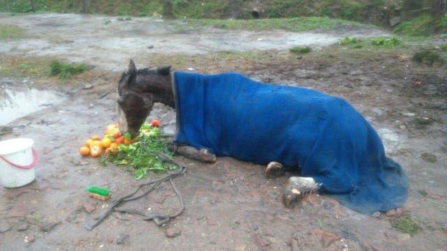 Agua y comida para Relincho mientras se organizaba su traslado