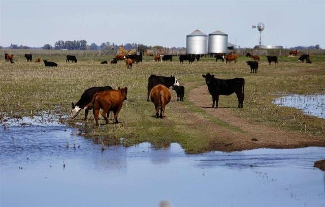 Un campo inundado en Henderson
