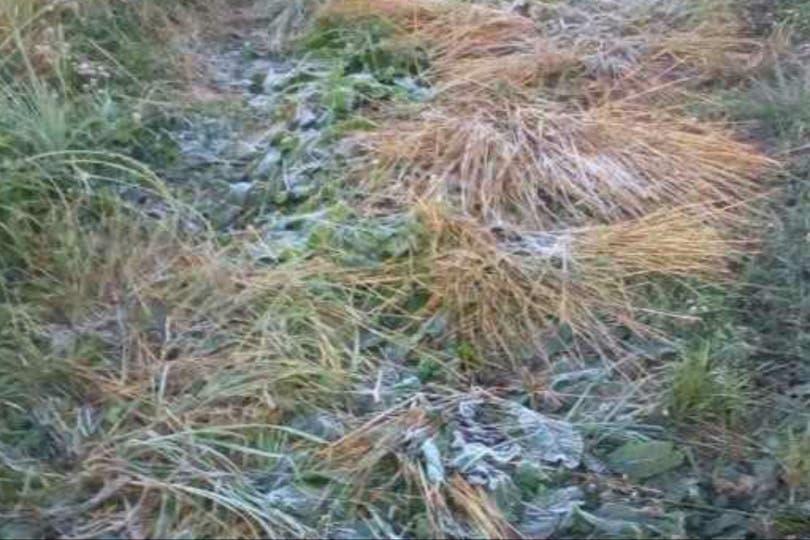 La helada dejó sus huellas en un campo de Azul