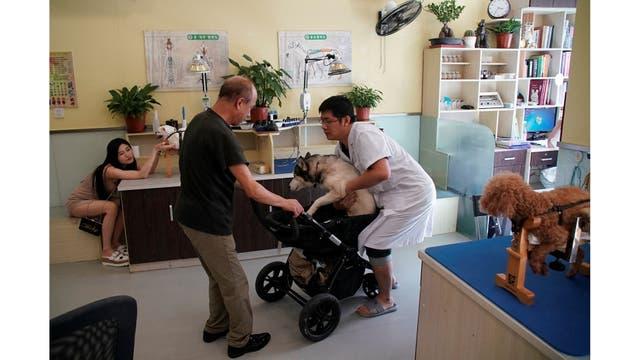 Los perros reciben tratamiento en Shanghai TCM