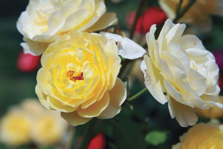 Ver fotos de jardineria 35