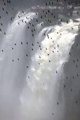 Los vencejos de las cascadas revolotean entre la bruma de los saltos
