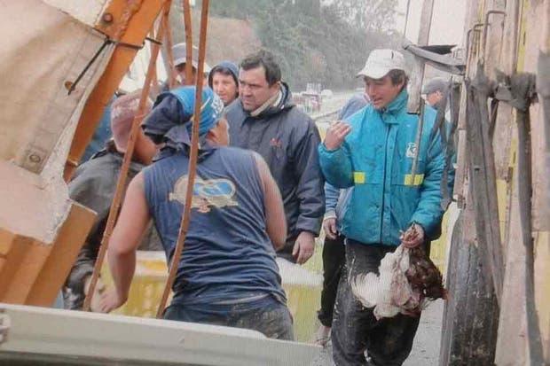 Los vecinos vaciaron la carga del camión que transportaba pollos