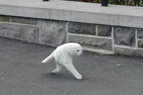 Al pobre gato las cámaras de Street View le dejaron una parte fuera del mundo digitla