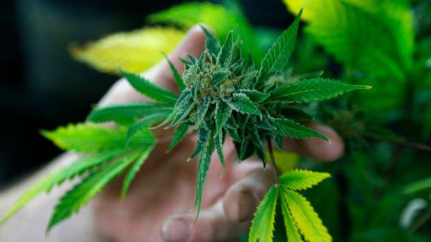 La obra social de la UOCRA deberá facilitarle cannabis medicinal a un menor enfermo