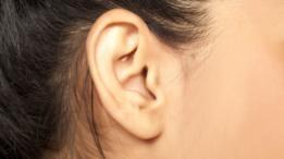 Los músculos de las orejas están conectados al facial por eso quienes mueven las orejas no pueden evitar mover las cejas.