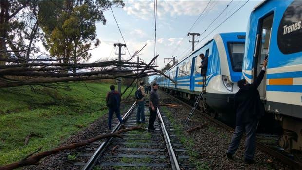 Se cayó una árbol en la vía del tren Roca y la línea presta un servicio reducido