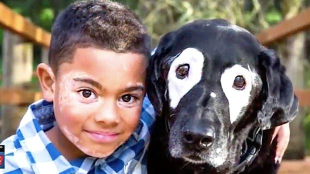 Niño vence depresión gracias a un perrito con su misma enfermedad