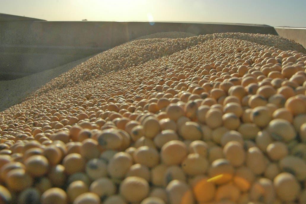 Productores de soja temen represalias por aranceles al acero