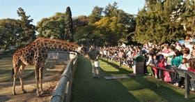 Una de las propuestas contempla ceder los animales del zoo a santuarios de fauna libre