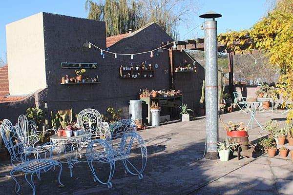 La colección de cactus, en la terraza. Foto: Cecilia Wall