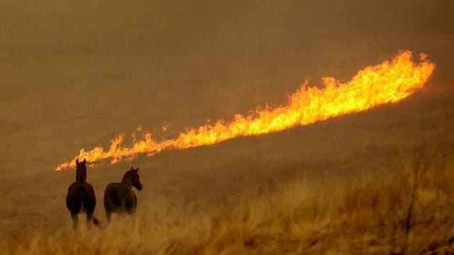 Más de 1500 viviendas destruidas y miles de animales que tratan de huir de la llamas