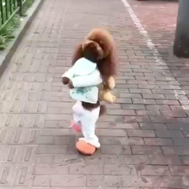 La realidad detrás de los videos de los perros que caminan en dos patas es más cruel de lo que parece