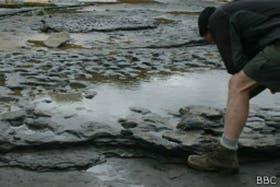 El científico Nick Ashton, en la playa de Norfolk donde se hallaron las huellas.