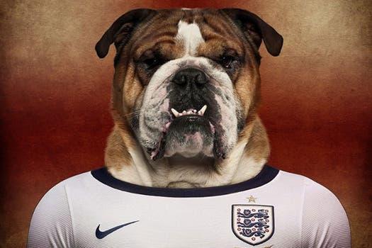 Bulldog inglés.