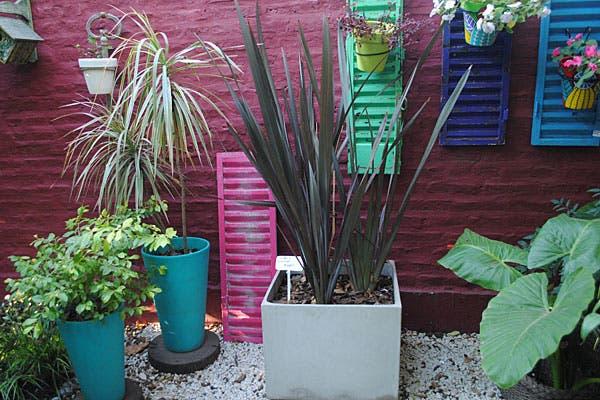 Distintas opciones para ubicar las plantas del jardín. Foto: Cecilia Wall