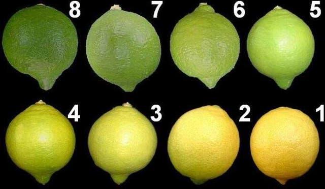Tabla de colores para la cosecha. EE.UU requiere entre 3 y 6 en la escala