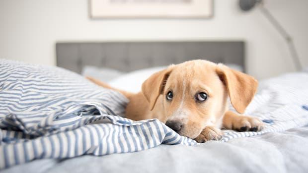 Dormir con el perro no está tan mal como creías