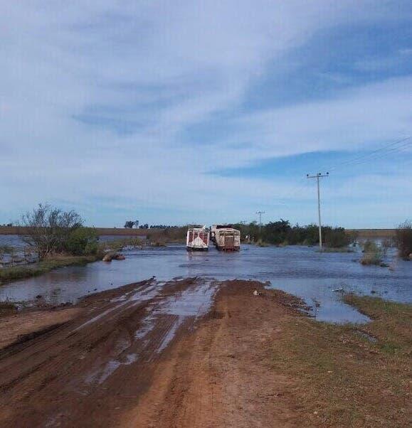 Dos camiones jaula se quedaron en un camino inundado