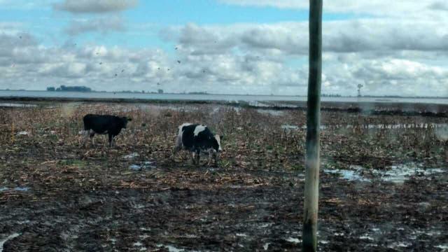No hay lugares secos para los animales del tambo