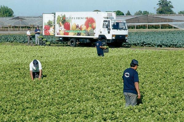 En pleno proceso de recolección de verduras.