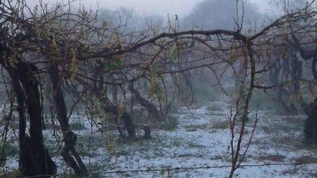 Un temporal de granizo causó destrozos en Famatina