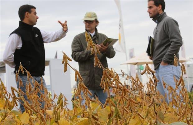 Los semilleros, con muchas consultas de los productores