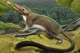 El antepasado de los mamíferos fue un pequeño animal de aspecto roedor que comía insectos