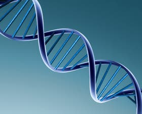 Una empresa de biotecnología reclamaba la patente del gen defectuoso
