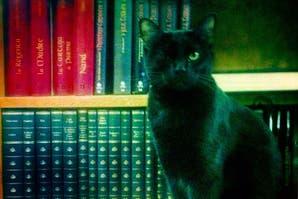 Confesionario: los libros que fingimos haber leído