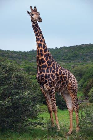 Todo lo que tenés que saber antes de viajar a Tanzania