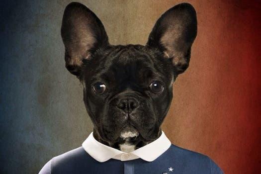 Bulldog francés.