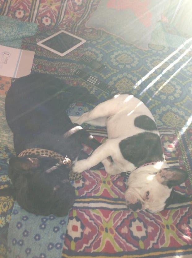Amante de la raza de perro bulldog francés, Paula Chaves dedica la mayoría de sus tuits a sus mascotas.