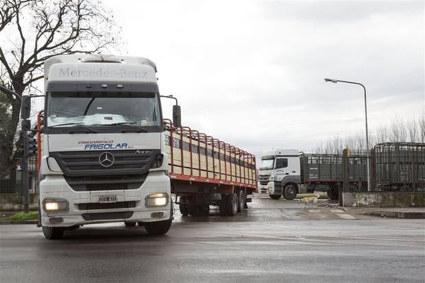 Por día, 270 camiones con ganado ingresan en el predio de Lisandro de la Torre y De los Corrales