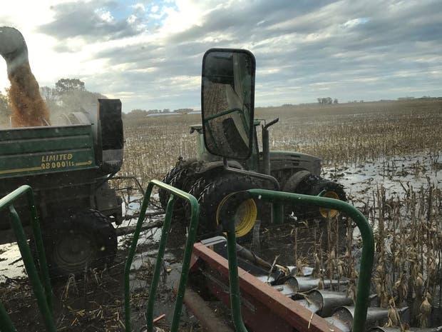 La cosecha fue complicada por los excesos hídricos