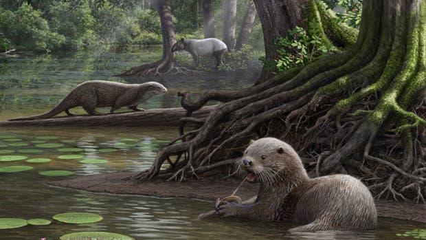 Encontraron una nutria gigante prehistórica de dos metros en China