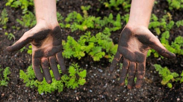 William Bailey muestra sus manos después de la siembra en la granja de Kajodlingen en Gotemburgo