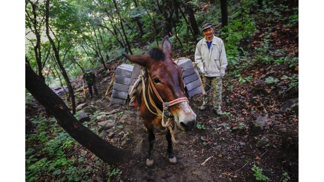 Un hombre camina detrás de una mula que lleva ladrillos por un sendero empinado hacia la sección Jiankou de la Gran Muralla