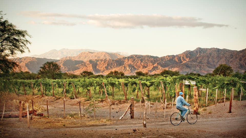 En Catamarca, vinos con altura que se suman al mapa vitivinícola del país