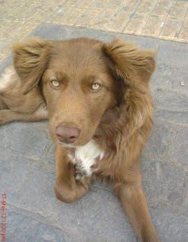 Con esta foto, que sacó en mayo de 2012 en Chile, Kaylan buscó a su perro. Foto: facebook.com/kaylan.oconnor/