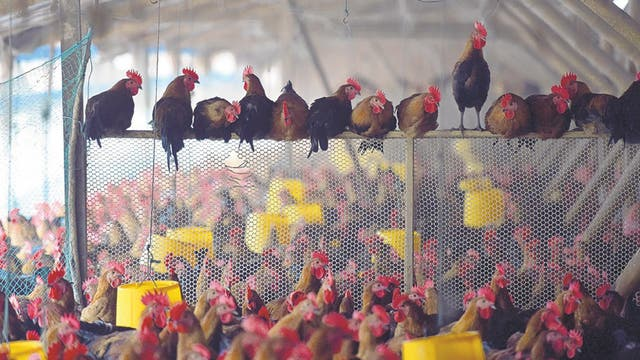 La proteína de este subproducto es clave para alimentar vacas, pollos y cerdos