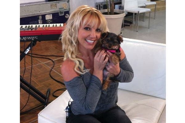Se llama Hannah Spears y es la mascota de Britney Spears, como su nombre lo indica. La cantante la presentó en las redes sociales y le abrió una cuenta en Twitter.