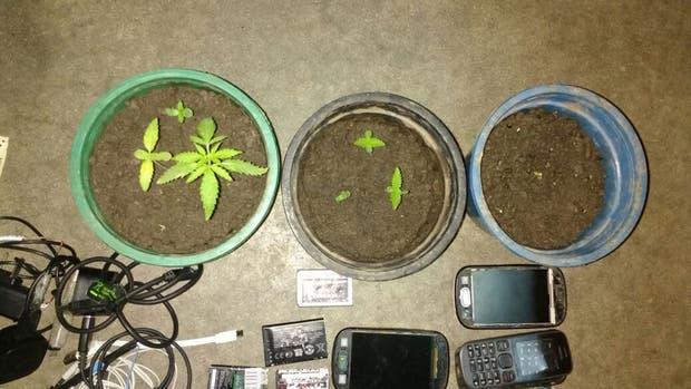 Secuestran plantas de marihuana, 38 armas blancas y 137 celulares en una cárcel bonaerense