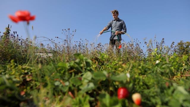 John Block, superintendente en el jardín botánico de Augustenberg, riega las plantas en Malmö